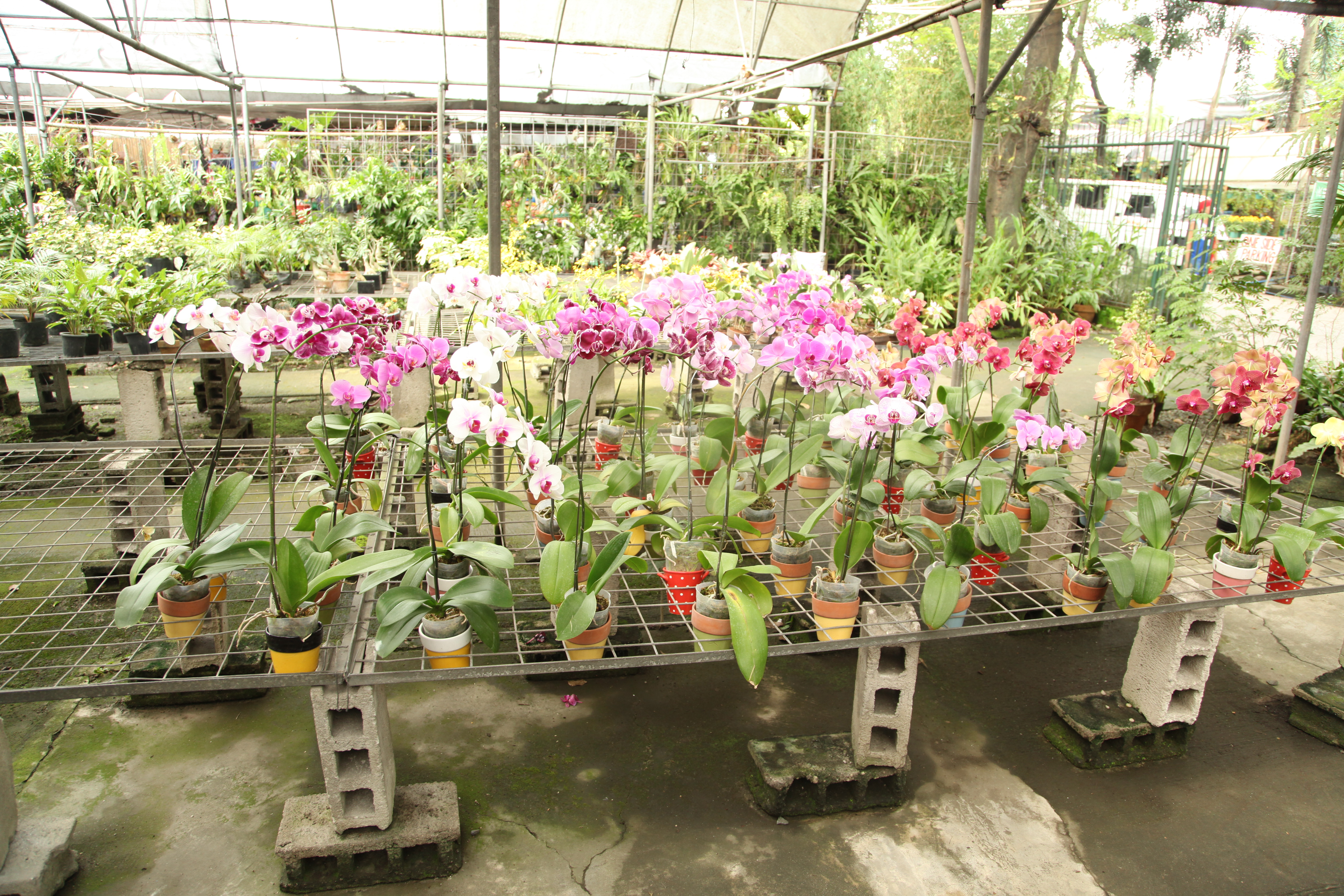 A Visit To The Nursery And A Photo Gallery Live Joy Fully